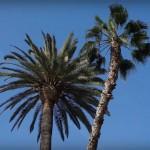 VÍDEO: El sol y la vitamina D