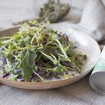 PRODUCTO FAVORITO. Ensalada de col lombarda y germinados con hierbas